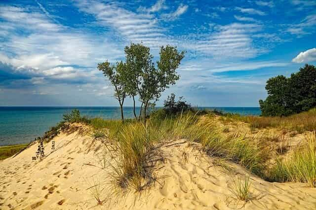 indiana dunes state park, tree sky water sand